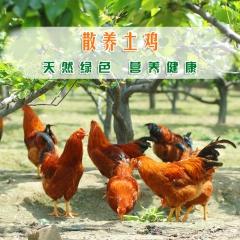 随猿散养土鸡公鸡 2.8斤 只