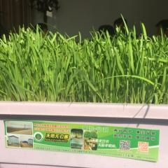 南宫无公害黄韭盆栽纯天然无添加农药蔬菜箱 5kg 盒