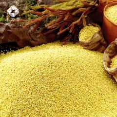 禾为贵 坡地杂粮 小黄米 黄小米礼盒 月子米 宝宝米 绿色认证小米(精品) 5kg 盒装