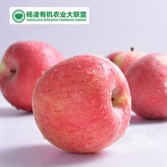 CORNER STONE 35°N苹果有机种植果径75+ 20枚 盒装