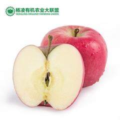 CORNER STONE 35°N苹果有机种植果径80+ 9枚 盒装