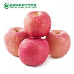 CORNER STONE 35°N苹果有机种植果径85+ 12枚 盒装