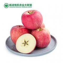 CORNER STONE 35°N苹果有机种植果径90+完美的基因表达 9枚 盒装