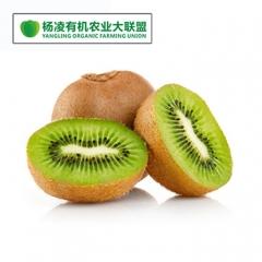 CORNER STONE 徐香猕猴桃 有机种植 2.5kg 箱装