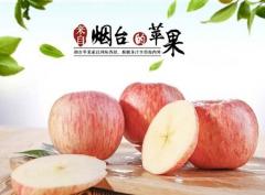 养马岛一级绿色烟台红富士苹果80# 2.5kg 盒装