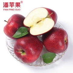 潘苹果天水花牛苹果新鲜蛇果水果礼盒红元帅冰糖心苹果 8粒 箱装